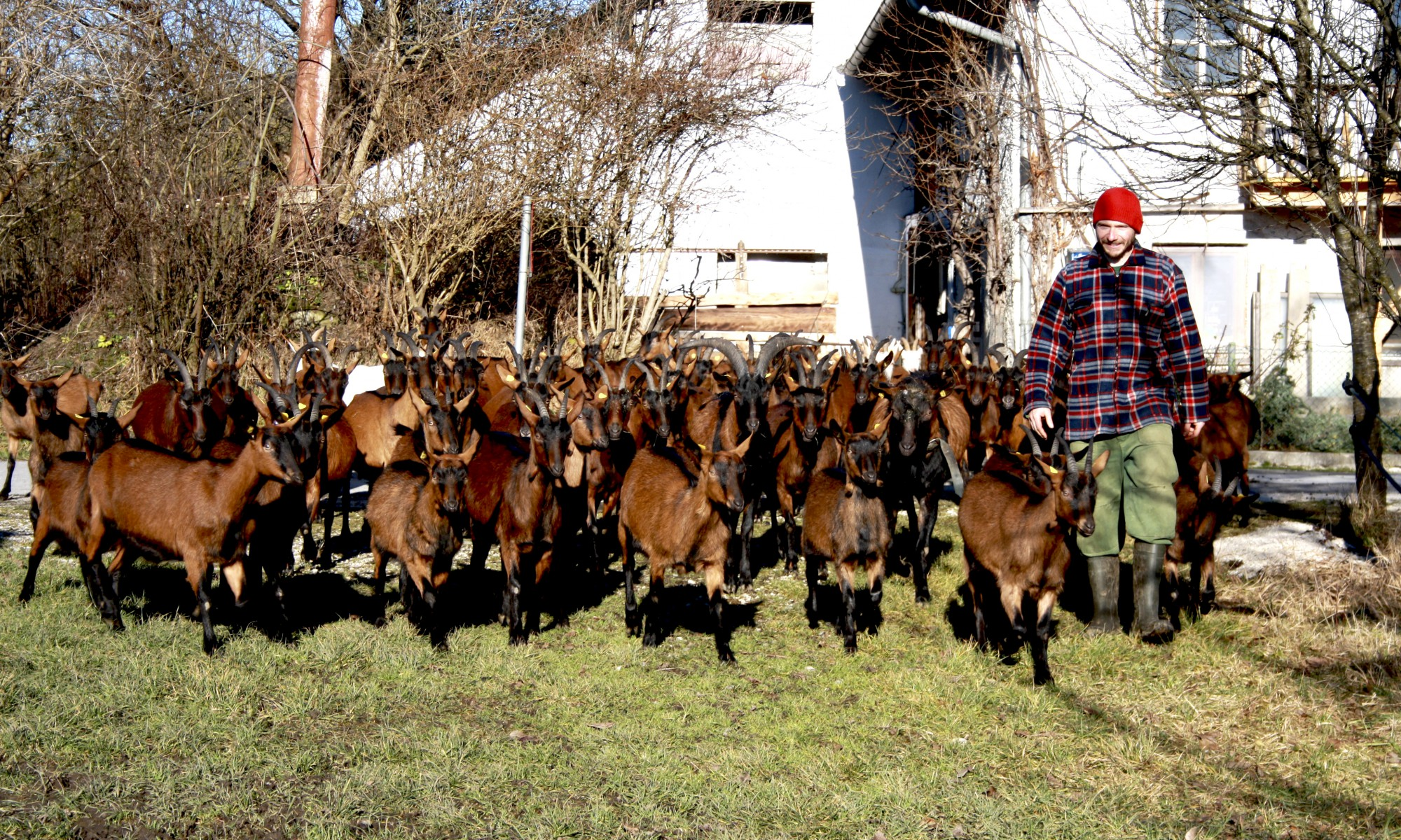 unsere grasse herde